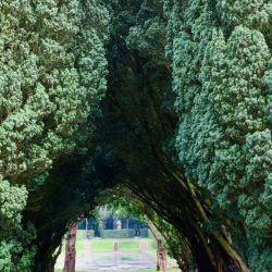 Tejos centenarios forman un túnel verde que invita a ingresar a los jardines del Castillo de Antrim. Foto: Daniela David/dpa