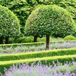 El jardín de la finca de Montalto exhibe siempre un orden perfecto. Foto: Daniela David/dpa
