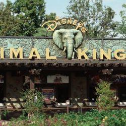Es el undècimo nacimiento de un rinoceronte blanco en el parque temàtico Disney´s World Kingdom de Florida.EE.UU.