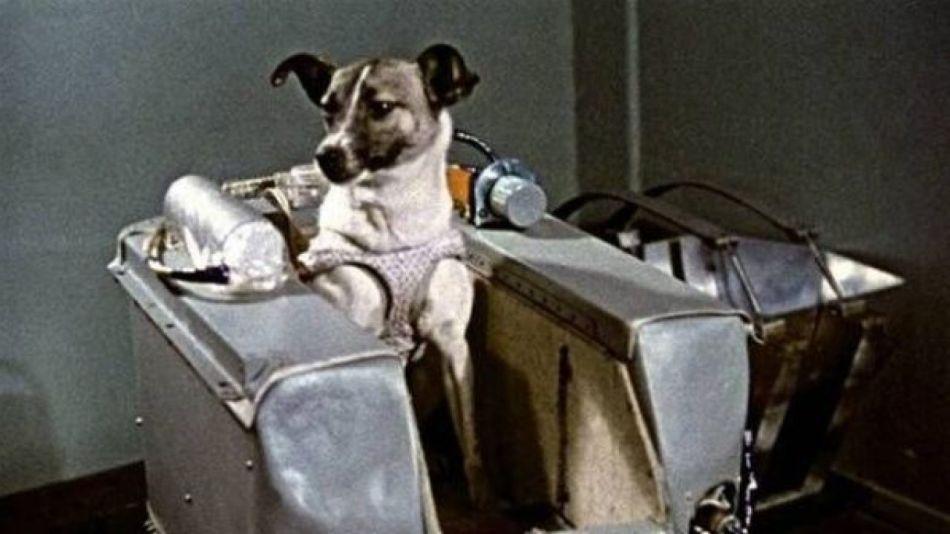 Laika perra del espacio astronauta