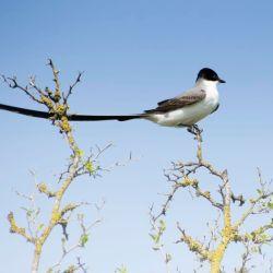 En la isla Martín García conviven cientos de especies de aves.