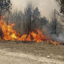 """En materia de Peligrosidad de Incendios Forestales, en Jujuy se categoriza con grado de """"Peligro Extremo""""."""