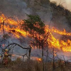 De las 19.797 hectáreas de bosques y pastizales que fueron arrasadas por los incendios en Jujuy, 6.475 corresponden al Parque Nacional Calilegua.