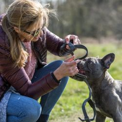 Al elegir un arnés o un pretal para el perro hay que atender a la conformación anatómica del animal. Foto: Christin Klose/dpa