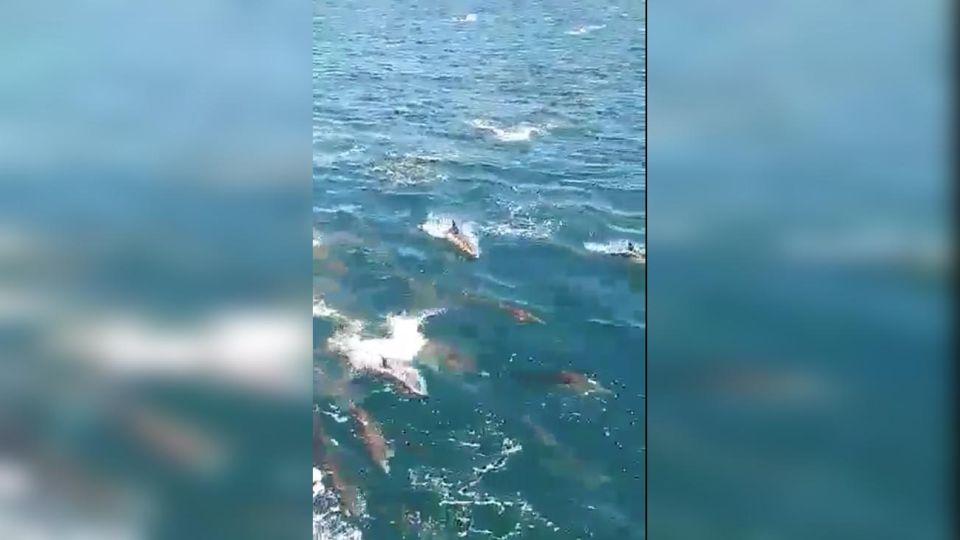 Delfines en Mar Chiquita 20201105