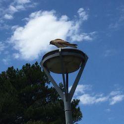Aves Solidarias propone observar la naturaleza y compartir esa experiencia a través de las redes para romper el aislamiento generado por el Covid.