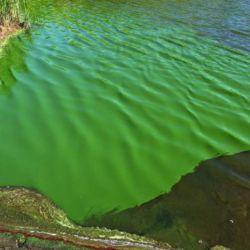 El curioso color verdoso del agua en varias zonas del Delta despertó la preocupación de los lugareños.