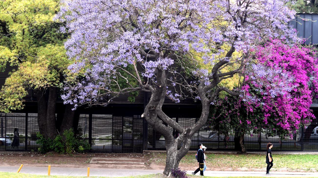 Buenos Aires florece  parte dos
