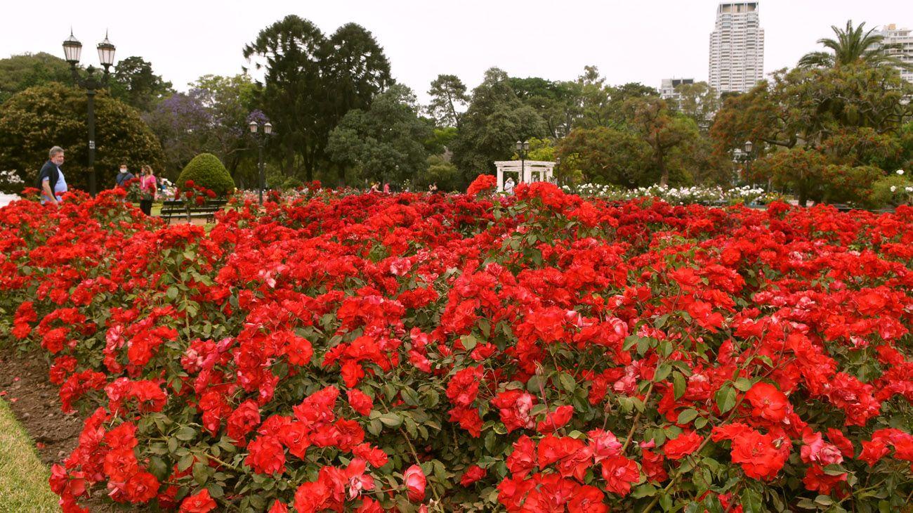 Buenos Aires florece  parte uno