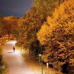 Un hombre camina por una carretera en la isla del Danubio en un día de otoño en Viena durante un segundo cierre hasta fin de mes para frenar la propagación de la pandemia del nuevo coronavirus (Covid-19) en curso. | Foto:GEORG HOCHMUTH / APA / AFP