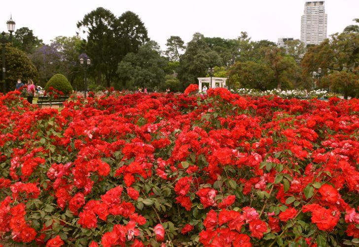 Buenos Aires florece  parte uno 20201114