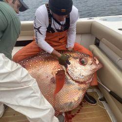 El colorido y gigante pez luna pesó 65 kilos.