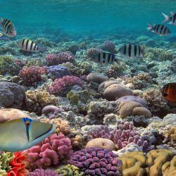 El robot SuBastian les permitió a los científicos realizar un minucioso mapeo submarino del fondo de la Gran Barrera de Coral del norte.