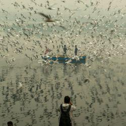 India, Nueva Delhi: un hombre toma fotografías para las gaviotas que vuelan a lo largo del río Yamuna durante el inicio de la temporada de migración invernal. | Foto:Pradeep Gaur / DPA