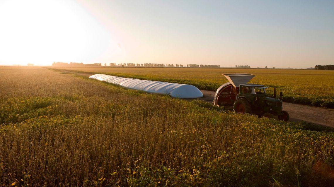 A tractor transfers soybeans into a silo bag in Venado Tuerto.
