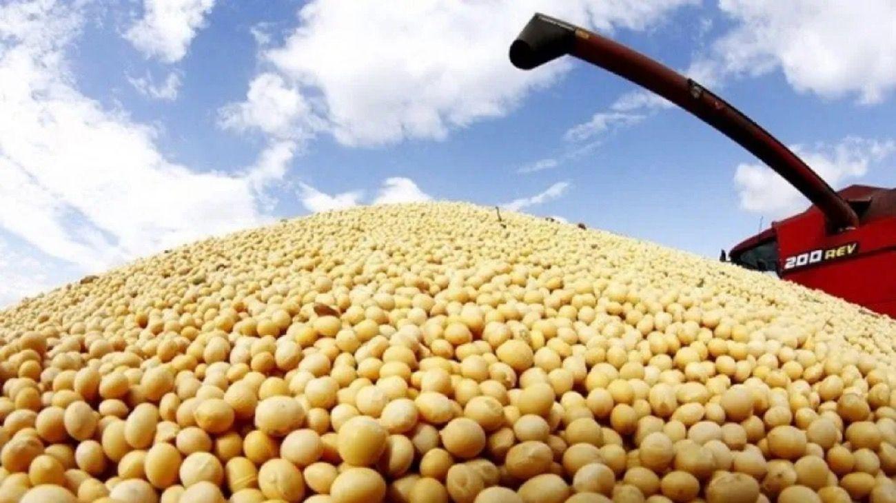 JUGADOR. Argentina es uno de los principales productores mundiales de soja.