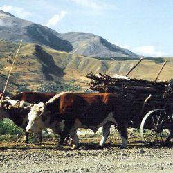 Alto Río Percy, a pocos kilómetros de Esquel, es un pueblo de carreros que merece ser visitado.
