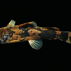 El descubrimiento desvirtúa por completo las creencias de que estos individuos pertenecían a solo dos especies en Colombia.