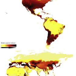 El mapa muestra los lugares donde están distribuidas en el mundo las distintas especies de abejas.