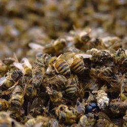 Los científicos compararon datos sobre la aparición de especies de abejas con una lista de verificación de más de 20.000 ejemplares.