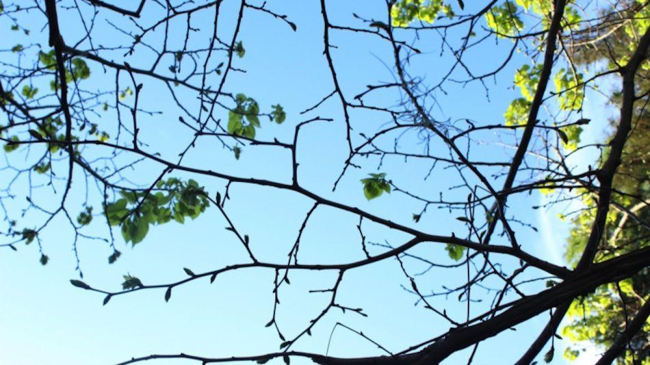 Árboles de Buenos Aires