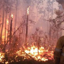 En la Reserva Biósfera Yabotí l fuego ya consumió 210 hectáreas.