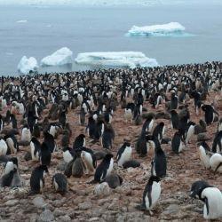 Los turistas se sorprendieron ante la gran cantidad de pingüinos junto a sus crías.