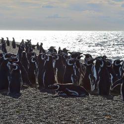 En toda la zona de Punta Norte se ha registrado un mayor crecimiento del número de ejemplares.