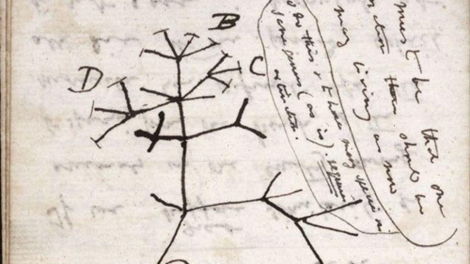 El árbol de la vida, dibujo original de Charles Darwin