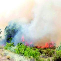 Hasta el momento el fuego ya arrasó con más de 1.000.000 de hectáreas en la Argentina.