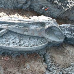 Los especialistas no se explican por qué sus restos aparecieron tan lejos de las aguas.