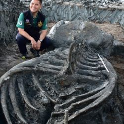 El impresionante cetáceo estaba enterrado a 12 kilómetros de la costa de Samut Sakhon, al suroeste de Bangkok.