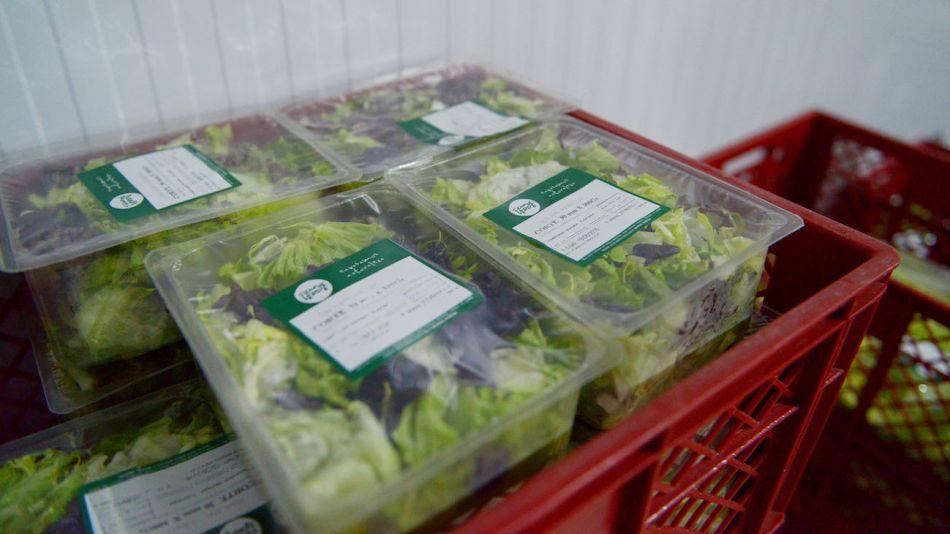 Exportaciones de hortalizas frescas