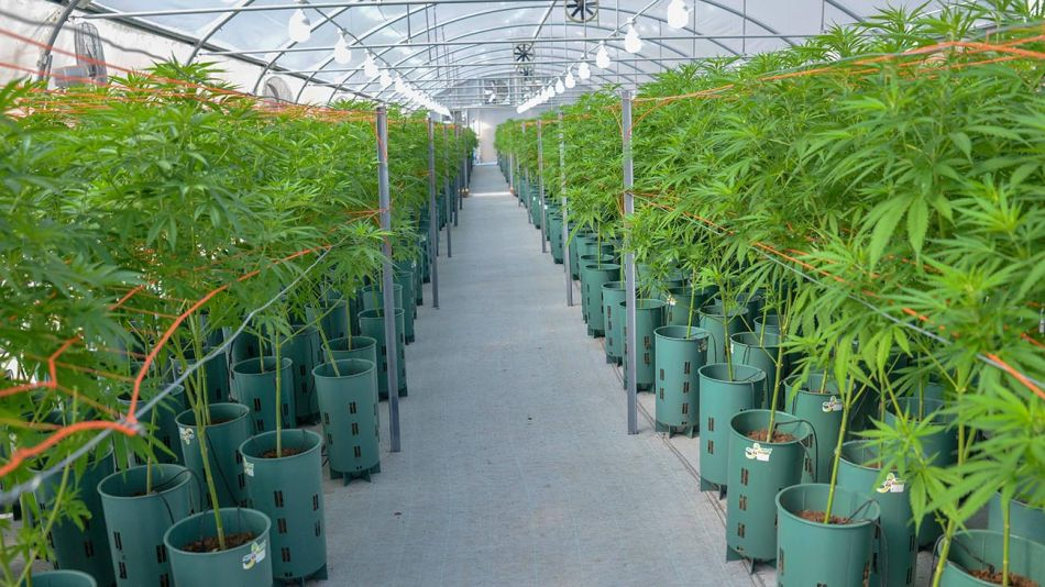 Jujuy Cannabis 20201202
