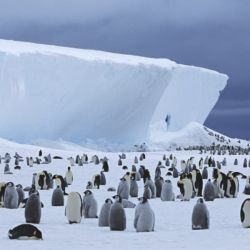 El impresionante iceberg abarca 4.200 kilómetros cuadrados de hielo flotante.