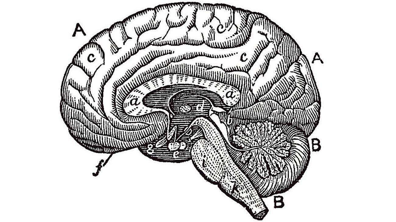¿Se puede entrenar la mente?