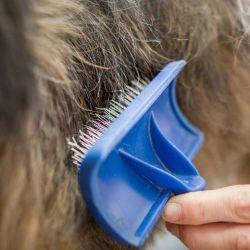 Cepillar regularmente el pelaje del perro disminuye la cantidad de pelo que el animal pierde en la casa. Foto: Frank Rumpenhorst/dpa