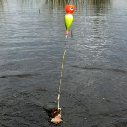 Pesca de tarariras en una laguna de Maipú, Buenos Aires.