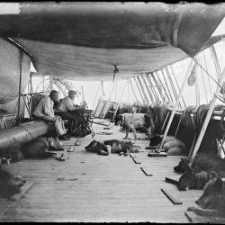 Una de las claves del éxito de su expedición fue el uso de esquís y trineos tirados por 52 perros esquimales.