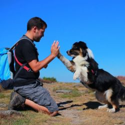 Enseñarles a nuestros amigos a hacer algunos trucos requiere de mucha paciencia, dedicación y cariño.