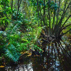 La vegetación tiene un rol clave en la lucha contra la crisis climática mundial.