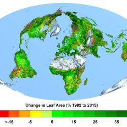El estudio comprobó que la reducción a nivel mundial ha llegado al 50% de forma progresiva desde 1982.