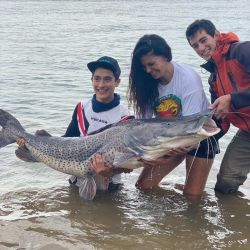 Además de grandes surubíes, en Ita Ibaté se pescan otras interesantes especies, como pacúes, manguruyúes, armados y exóticas viejas del agua.