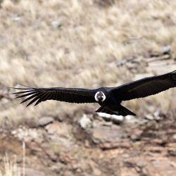Se creó el segundo Parque Nacional en la provincia, sumándose al Parque Nacional Quebrada del Condorito.