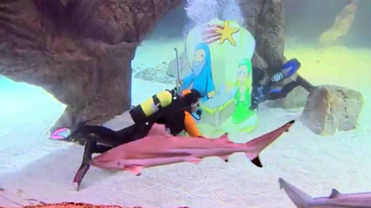 Tiburones nadan alrededor de un Belén bajo el agua
