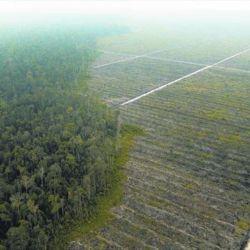 La alternativa que están desarrollando reemplazaría al aceite de palma natural en todos los productos donde se lo emplea.