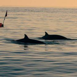 Las señales de ecolocalización que usaron bajo el agua van a ser cruciales para confirmar de qué especie son o sin son una nueva.