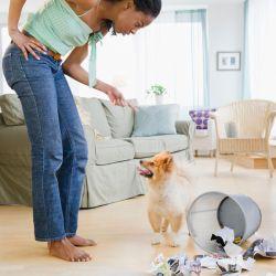 El entrenamiento aversivo y el castigo pueden tener serios efectos negativos en la salud y el comportamiento de los canes.