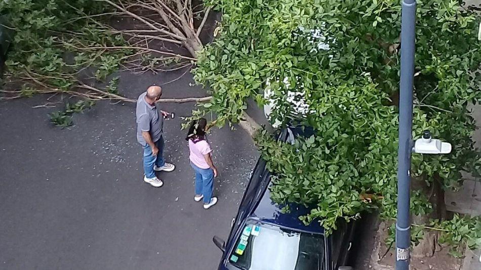 Más de 100 caídas de árboles en la Ciudad.