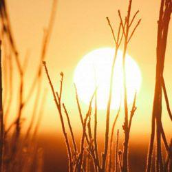 El solsticio de verano de 2019 tuvo lugar el 22 de diciembre a las 01: 19 horas.